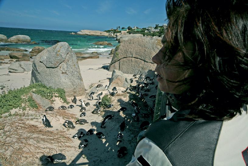 Pinguine 'hautnah'