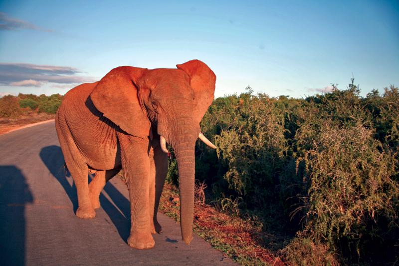 Auf 'Safari' im Addo Elephant Park