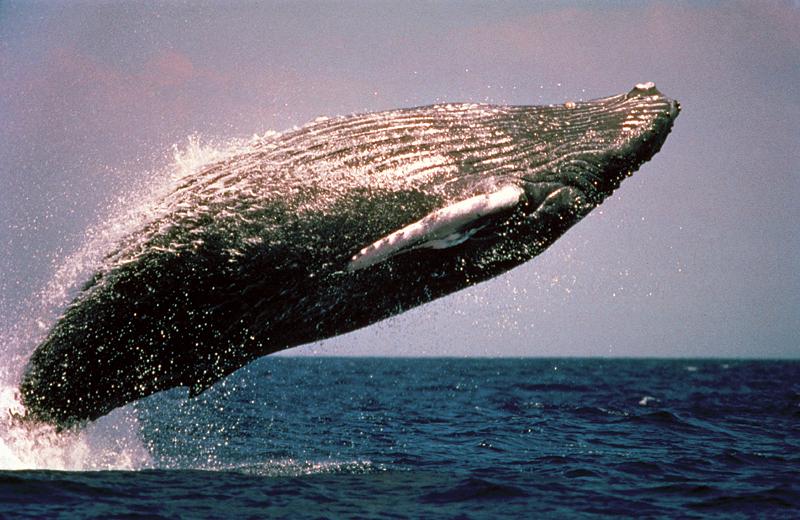 In Südafrika kann man auch Wale bestaunen