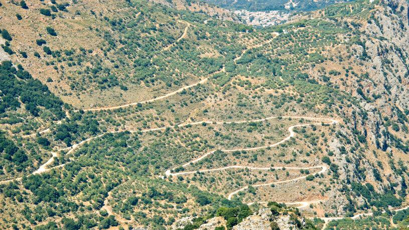 """Auf """"alpinen"""" Straßen kurven wir auch an der etwa 2.000 Jahre alten Platane von Krasi vorbei."""